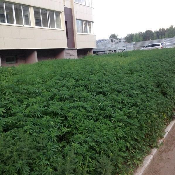 Marihuana en unos jardines públicos por un error.