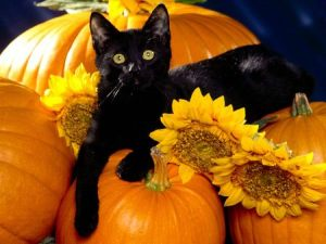 Blog_Halloween_Black cat