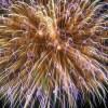 隅田川の花火をウチから見ると スカイツリー大爆破みたいになるw