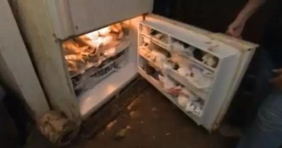 gatos refrigerador