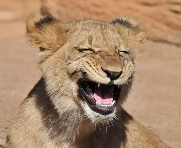 leon riendo 2