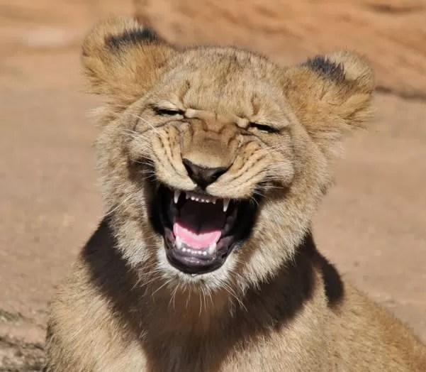 leon riendo