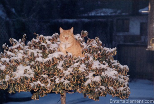 Marmalade in the tree