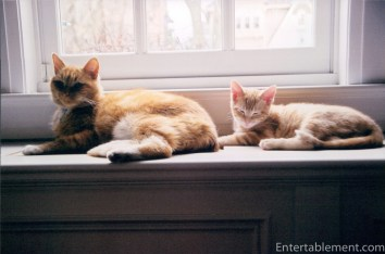 Marmalade and Tigger warming up on the radiator