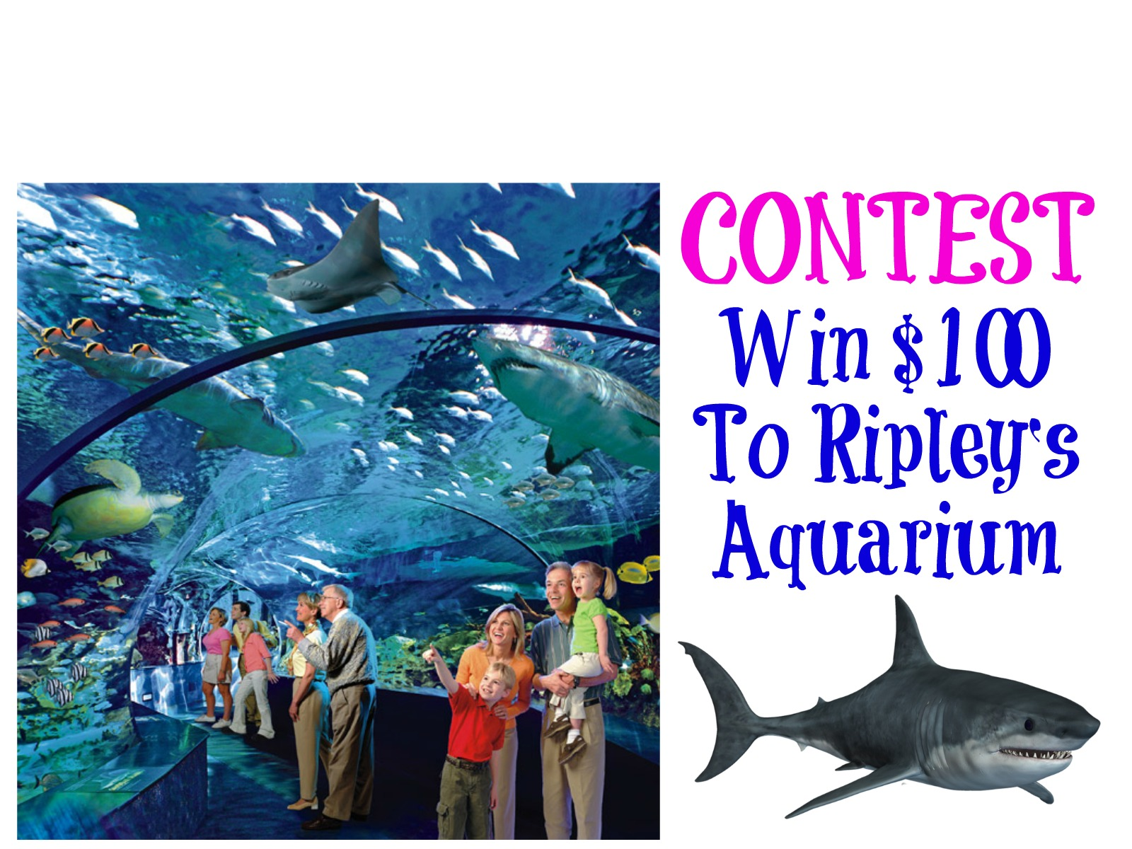 CONTEST: Win $100 to Ripley's Aquarium