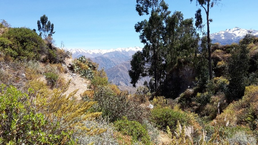 canyon-colca-cabanaconde