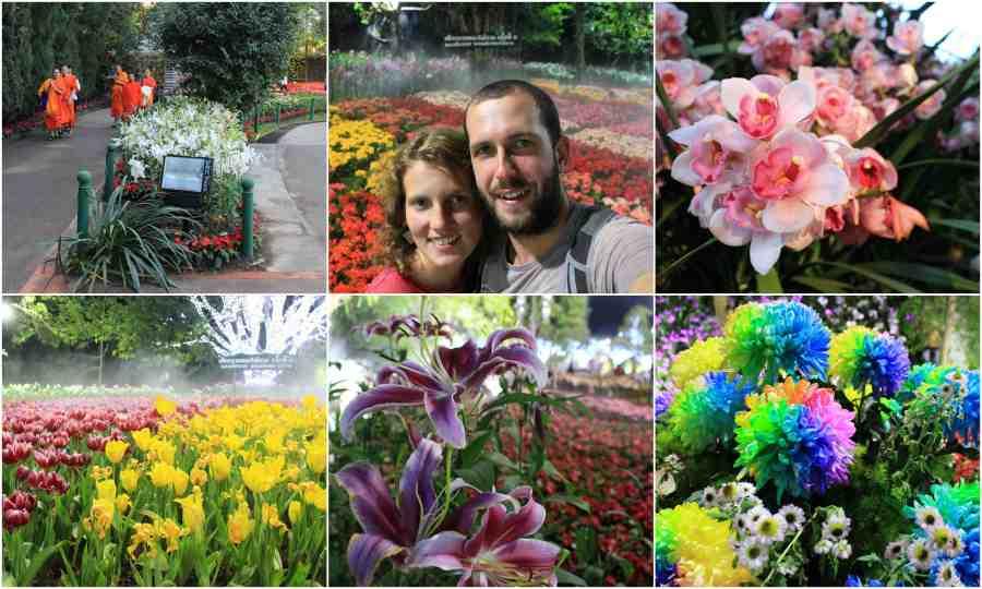 fleurs-chiang-rai