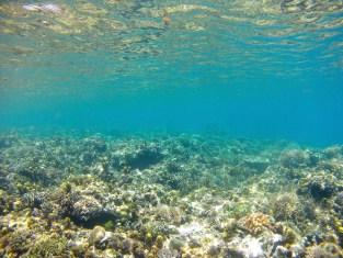 coraux-snorkelling-palawan