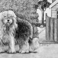 Old English Sheepdog Pencil Drawing