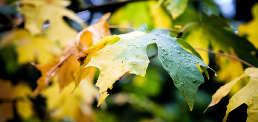 Cosa fare a Bormio quando piove