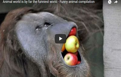 Funny Animals of the World