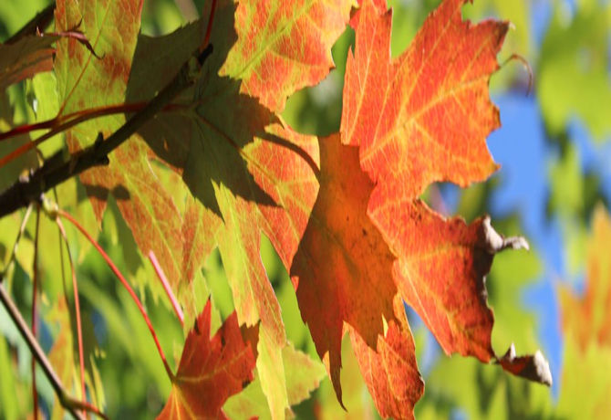 leafincolorbanner