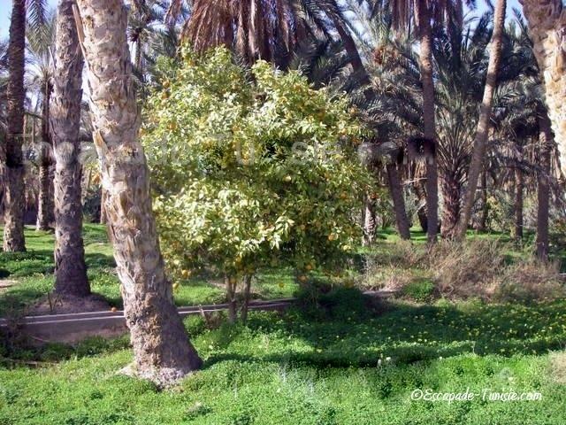sécurité tunisie | mides palmeraie