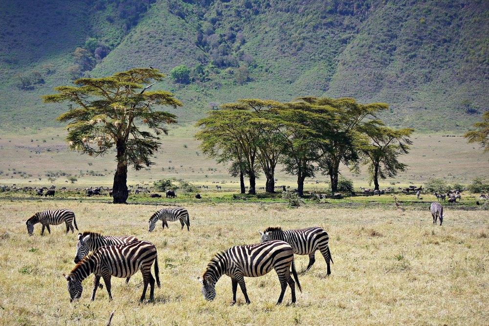 Im Garten Eden Afrikas: Der Ngorongoro Krater