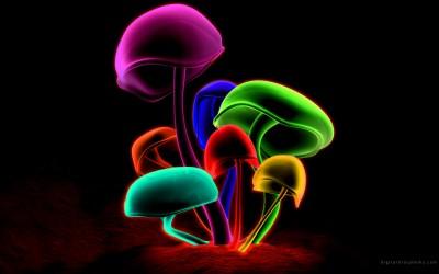 Cool Mushroom wallpaper | 2560x1600 | #82271