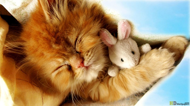 Cute Baby Kittens Wallpaper 1366x768 45950