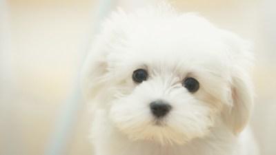 Cute Puppy wallpaper | 1600x900 | #58332