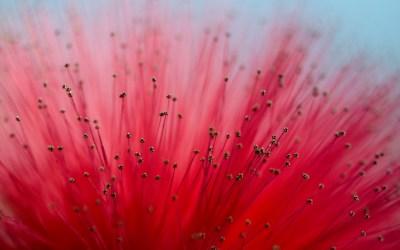 Flower Close-Up Macro wallpaper | 1680x1050 | #22868