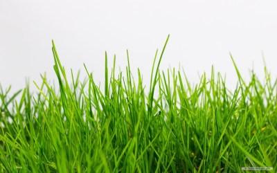 Grass Background wallpaper | 1280x800 | #53349