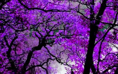 Violet wallpaper | 1920x1200 | #6379