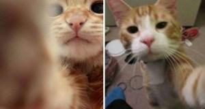 selfies gatos11