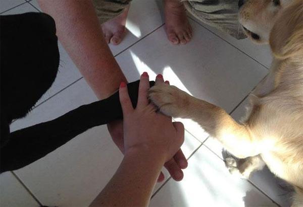 tradicion-perros