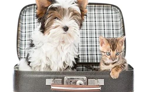 10 dicas pra viajar com cachorro ou gato de avião