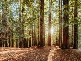 Image result for Bosque