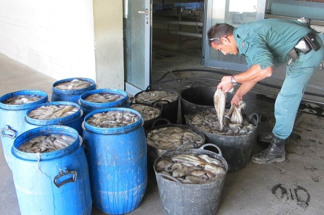 Lotes de pulpos interceptados a los pescadores. | ELMUNDO.es