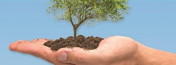 tree-planting-stuffer