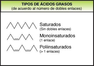 Fatty acids_ES