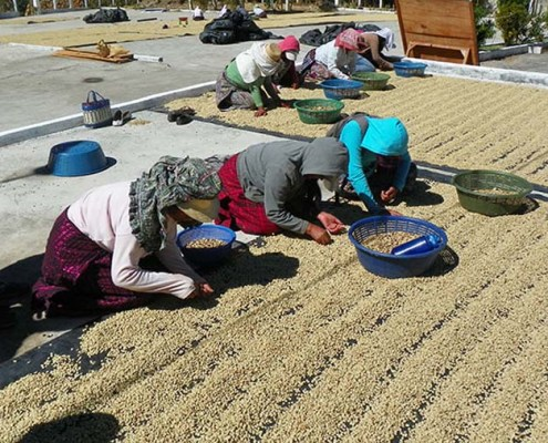 Guatemala Coffee Exporting