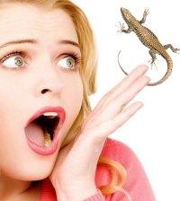 avoid lizards