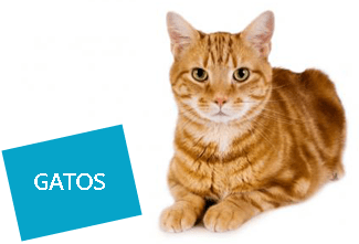 gatos-servicos-banner-sm-ethos-animal-comportamento-animal-e-bem-estar-1-2