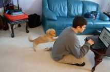 dog_love_title