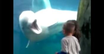 子供をからかう白イルカ