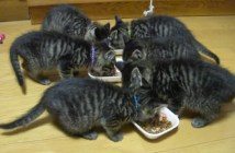 6匹の子猫