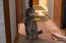 玄関チャイムの音で背筋を伸ばす猫