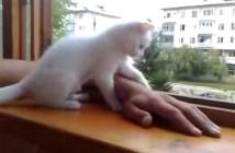 手を助ける子猫