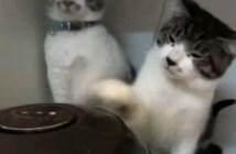炊飯器と猫