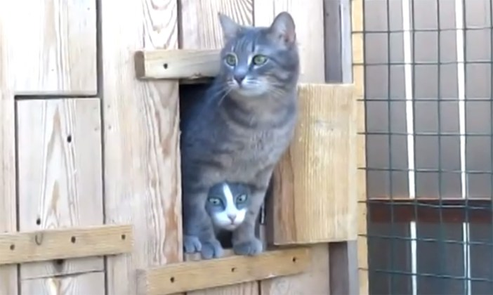 猫の顔がひょっこり