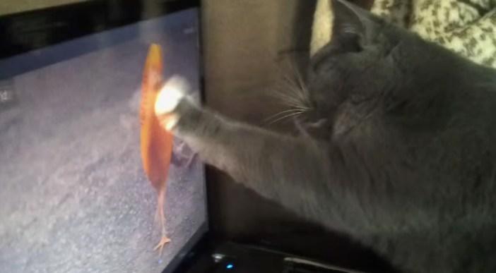 画面をタッチする猫