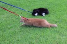 散歩を拒否する猫