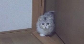 ゆっくり歩く猫