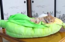 トウモロコシ猫