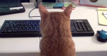 仕事を邪魔する猫