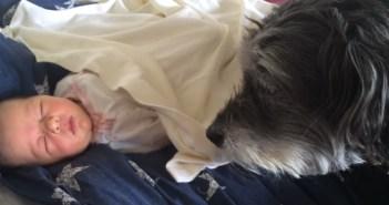 赤ちゃんをくるむ犬