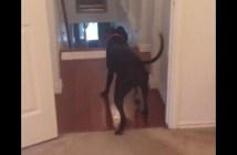 バックで部屋に入る犬