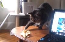 バナナの皮と猫