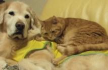 犬の背中で眠る猫